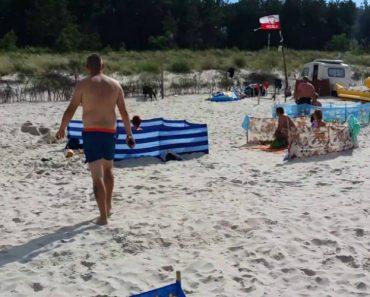 Banhistas Passam Por Mau Momento Depois De Javali Enfurecido Invadir Praia 5