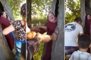 Quantos Amigos São Precisos Para Se Tirar Uma Pessoa Do Interior De Uma Árvore? 9