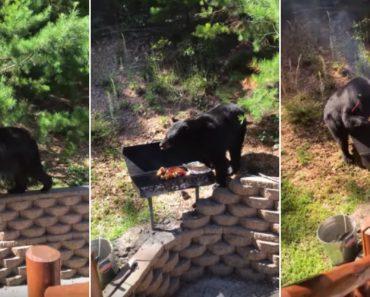 Família Empenhada Em Impedir Urso De Assaltar o Churrasco 1
