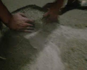 Milhões De Insetos Acumulados No Chão Parecem Areia 2