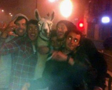 Jovens Bêbados Sequestram LAMA e Vão Passear De Elétrico 3
