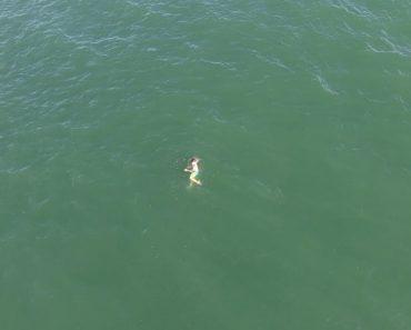 Salta Para o Mar Para Fugir à Polícia, Acaba Perseguido Por Tubarão 2