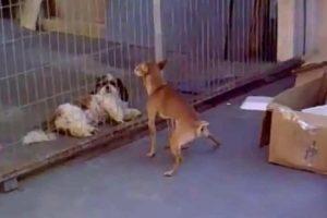 Cão Faz Tudo o Que Pode Para Atrair Cadela 10
