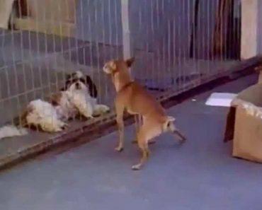 Cão Faz Tudo o Que Pode Para Atrair Cadela 7