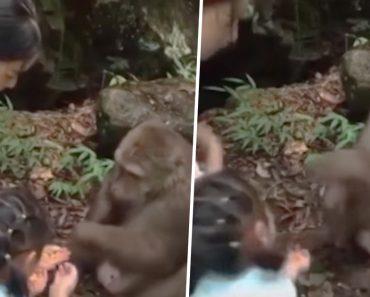 Criança é Fortemente Projetada Após Levar Inesperado Soco De Macaco 2