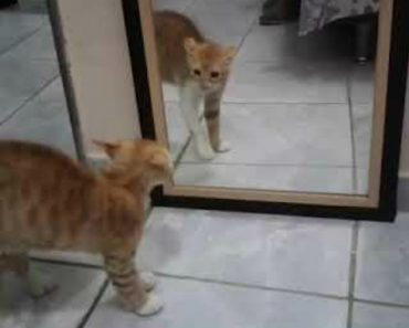 """Gato Leva à Letra à Expressão """"Borrado De Medo"""" Ao Ver o Seu Próprio Reflexo No Espelho 3"""