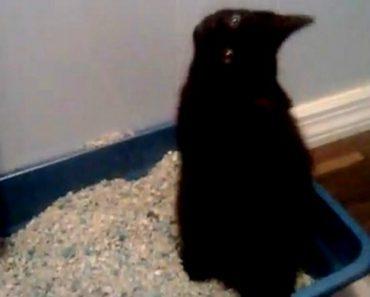 Gato Pensa Que é Stevie Wonder Quando Faz As Necessidades 1