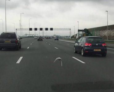 Pombo Usa Autoestrada Como Pista De Corrida e Ultrapassa Carros Com Uma Velocidade Alucinante 8