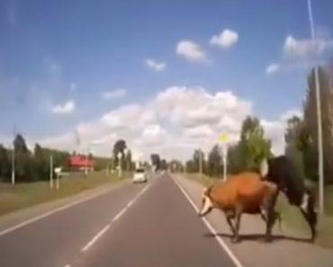 Iria Ser Difícil Explicar Este Acidente à Seguradora Se Condutor Não Tivesse Filmado 7