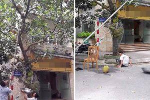 Trabalhador Erra Nos Cálculos e Sofre Verdadeira Dor De Cabeça Quando Pesado Fruto Cai Da Árvore 9