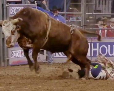 Cowboy Fica a Centímetros De Ser Pisado Na Cara Por Touro Depois De Cair No Chão 3
