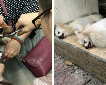 Homem Alvo De Investigação Por Cortar Cordas Vocais De Cães 'Barulhentos' 7