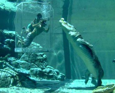 Visitantes Ficam Cara a Cara Com Crocodilos Gigantes Na Austrália 4