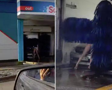 Homem Sem Roupa Lava-se Juntamente Com Carro Em Lavagem Automática 8