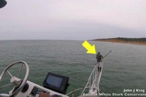 Às Vezes Os Tubarões Brancos Surpreendem e Assustam Mesmo Aqueles Que Os Estudam 9