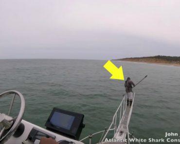 Às Vezes Os Tubarões Brancos Surpreendem e Assustam Mesmo Aqueles Que Os Estudam 4
