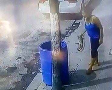 Mulher Coloca Pequeno Cão No Contentor Do Lixo Enquanto Passava Na Rua 2