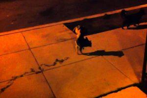Oscar: O Cão Que Faz Xixi De Forma Diferente 9