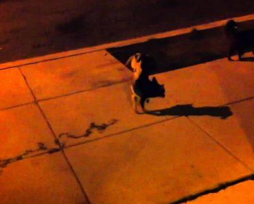 Oscar: O Cão Que Faz Xixi De Forma Diferente 8