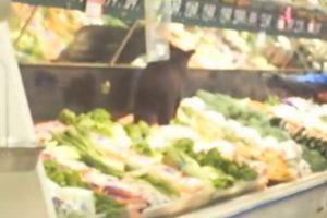 Pequeno Urso Tenta Fazer Compras Num Supermercado Local 10