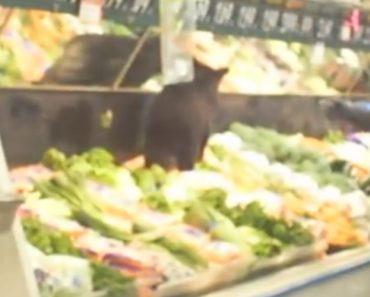 Pequeno Urso Tenta Fazer Compras Num Supermercado Local 7