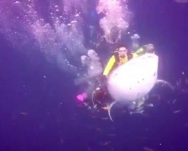 Mergulhador é Detido Após Divulgar Vídeo a Cavalgar Em Cima De Tubarão-Baleia 4