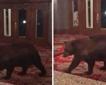 """Urso Abriu Porta e Passeou-se Por Hotel Que Inspirou """"The Shining"""" 3"""
