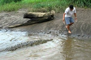 Corajoso Homem Brinca Com Crocodilo Como Se Fosse o Seu Animal De Estimação 10