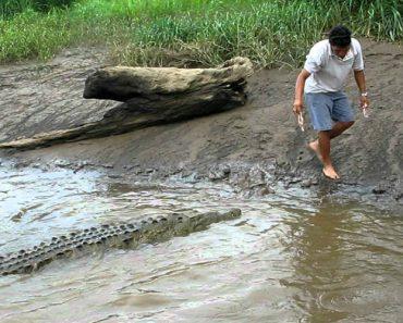Corajoso Homem Brinca Com Crocodilo Como Se Fosse o Seu Animal De Estimação 7