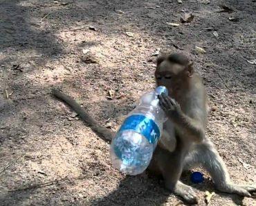 Inteligente Macaco Aproveita Paragem De Motociclistas e Rouba-lhes As Garrafas De Água 5