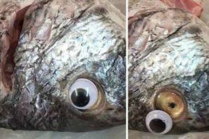 """Fecham Peixaria Que Vendia Peixes Com """"Lentes De Contacto"""" Para Ocultar o Mau Estado Dos Produtos 9"""