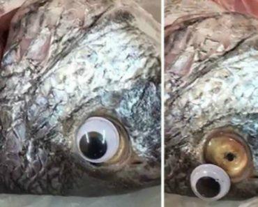 """Fecham Peixaria Que Vendia Peixes Com """"Lentes De Contacto"""" Para Ocultar o Mau Estado Dos Produtos 3"""