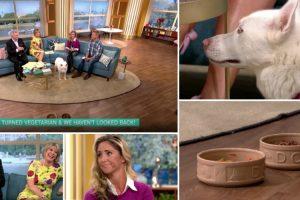 Mulher Afirma Que o Seu Cão é Vegetariano e Acaba Por Passar Vergonha Em Direto Na TV 8