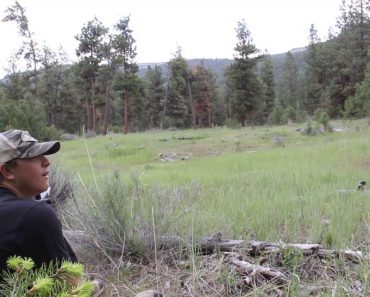 Caçadores Gravam o Impressionante Grito De Um Puma Em Plena Floresta 6