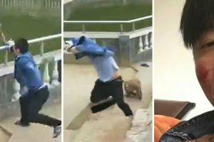 Macaco Vinga-se De Homem Que Tentou Empurrá-Lo Para a Água 10