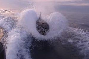 Orcas Perseguem Barco e Assustam Pescadores 10