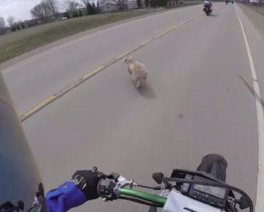 Cão Atravessa a Estrada e Provoca a Queda De Dois Motociclistas 5