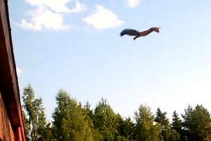 Esquilo Faz Incrível Salto De Telhado Para Árvore 10