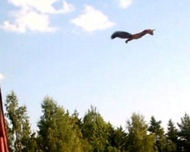 Esquilo Faz Incrível Salto De Telhado Para Árvore 9