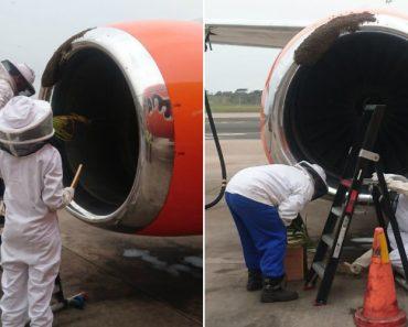 Abelhas Atrasam Voo De Companhia Aérea Ao Invadirem Turbina De Avião 2