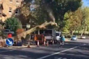 Ciclista Escapa à Morte Após Repentina Queda De Árvore 10