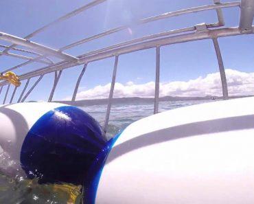 Enorme Tubarão Branco Tenta Destruir Jaula De Mergulhadores 6