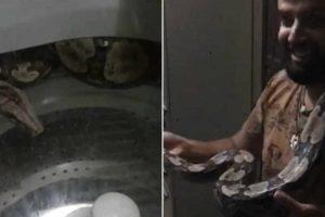 Cobra De Dois Metros é Encontrada Dentro De Máquina De Lavar Na Bahia 9