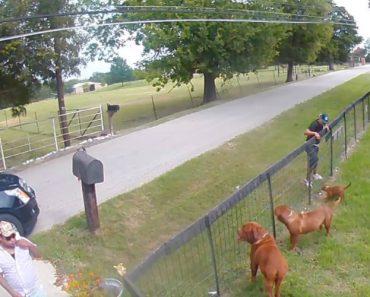 Câmara De Segurança Apanha Homens a Roubar Cão De Habitação 3