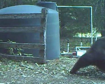 """Mangueira """"Vinga-se"""" e Provoca a Mais Angustiante Dor a Urso Que Só Queria Coçar As Costas 8"""