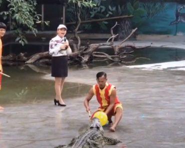 Imprevisto Colocou à Prova a Valentia Destes Homens Durante Atuação Com Crocodilo 4