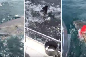 Pescadores Têm Encontro Imprevisto Com Tubarão 10