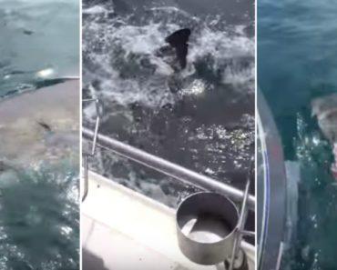 Pescadores Têm Encontro Imprevisto Com Tubarão 4
