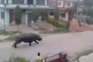 Enorme Rinoceronte Persegue Motociclista Em Estrada No Nepal 8