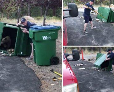 Homem Liberta 3 Ursos Bebés Que Haviam Ficado Trancados Num Caixote Do Lixo 6